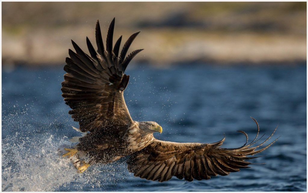 1080p philadelphia eagles wallpaper borders