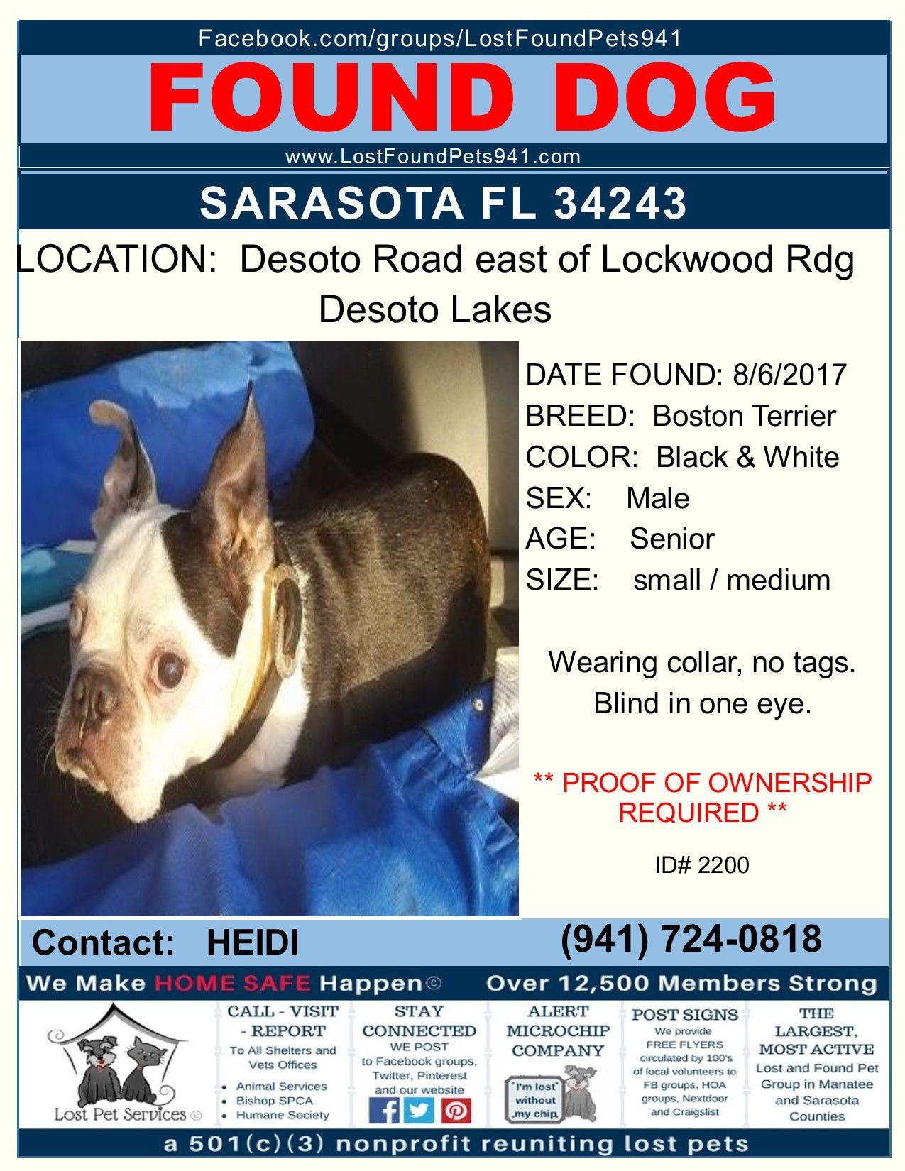 Do You Know Me Founddog Bostonterrier Lostdog Missingpets