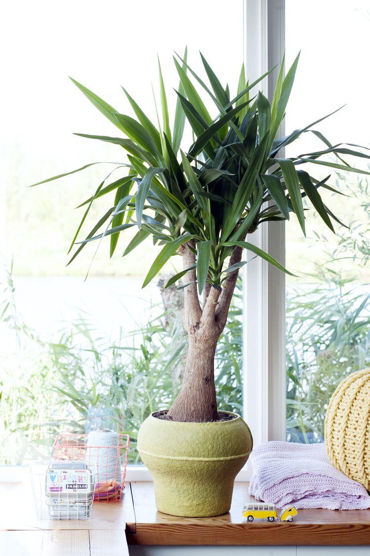 Happy life! De Yucca voelt zich prima thuis in deze vrolijke trend. #Woonplant #Yucca #Mooiwatplantendoen #mwpd