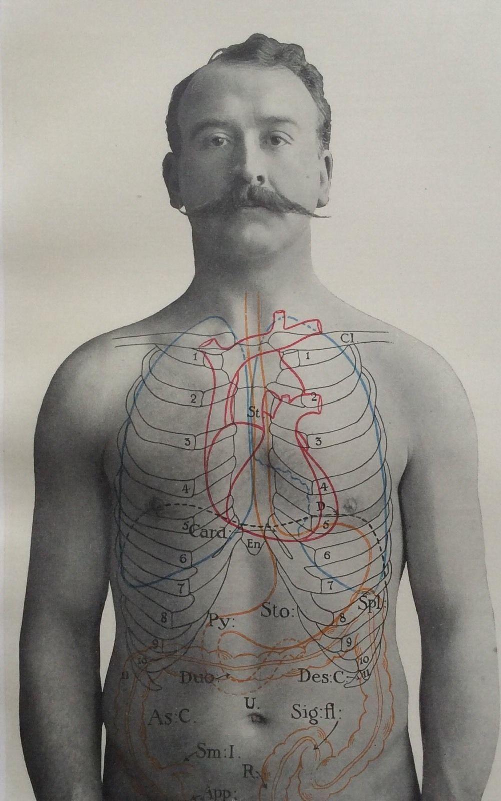 Antique 1900s Medical Diagram Scientific Print Human Anatomy Stomach ...