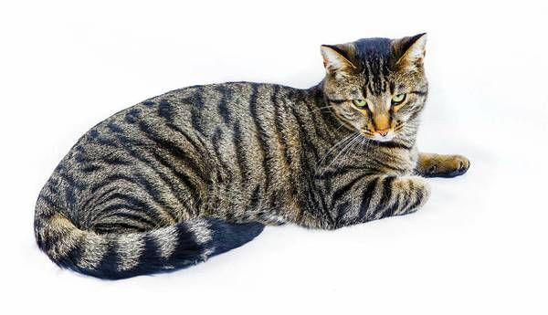 Favorite This Post Reward Missing Female Tiger Cat Lyme Hide