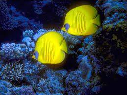 Resultado de imagen de peces de colores