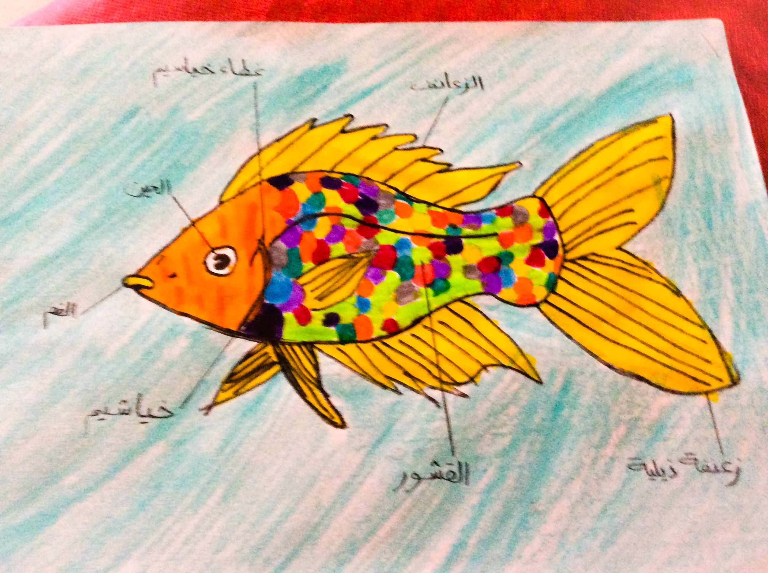 Fish Diagram Done By Us Pinterest