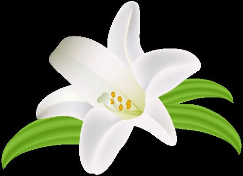 Lilium Flower Png Clipart Image Lilium Flower Lilly Flower Flower Clipart