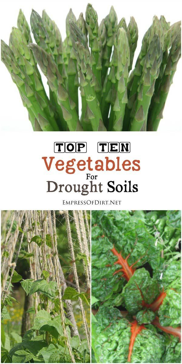 Best Vegetables for Drought Soils Drought soil conditions can be very challenging for vegetable growing. This list from High-Value Veggies shows which edible crops do best in drought conditions as well as things you can do to give your soil a boost.Drought soil conditions can be very challenging for vegetable growing. This list from High-Value Veggies ...