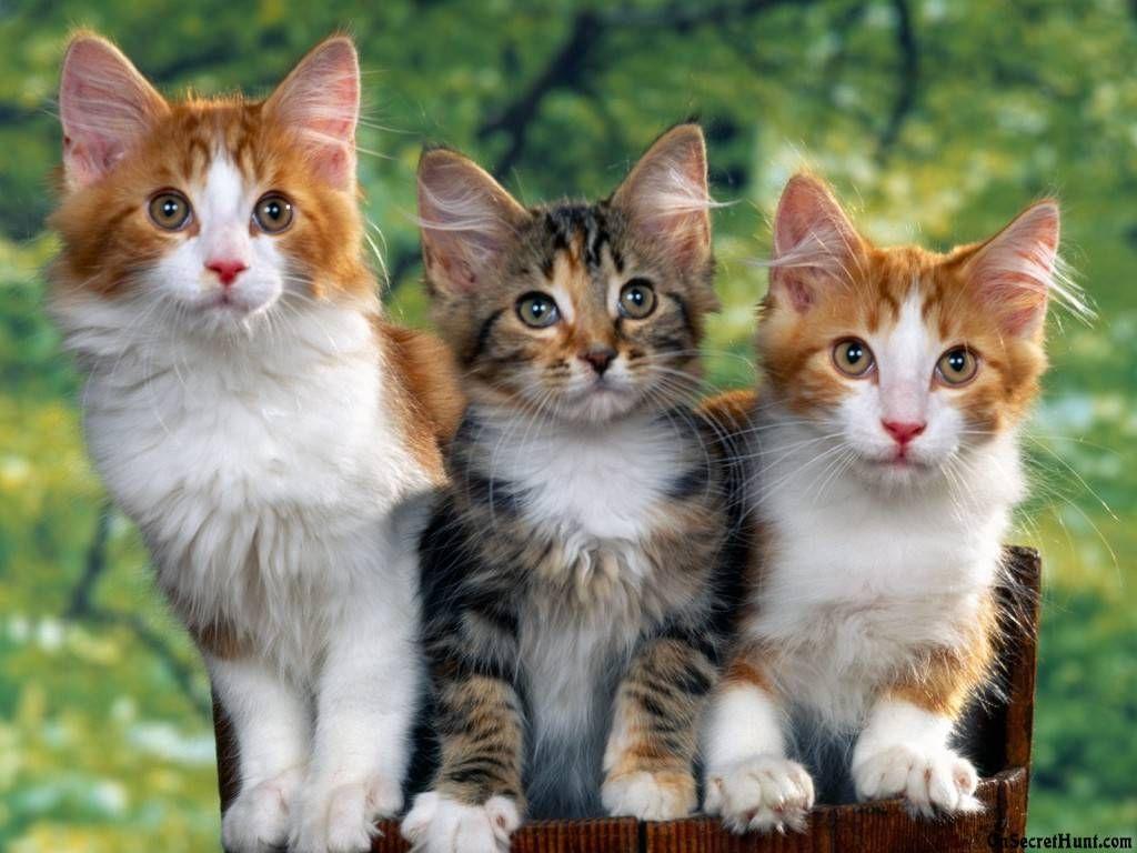 Cats Cats Cats Cat Selfie Madness Pinterest