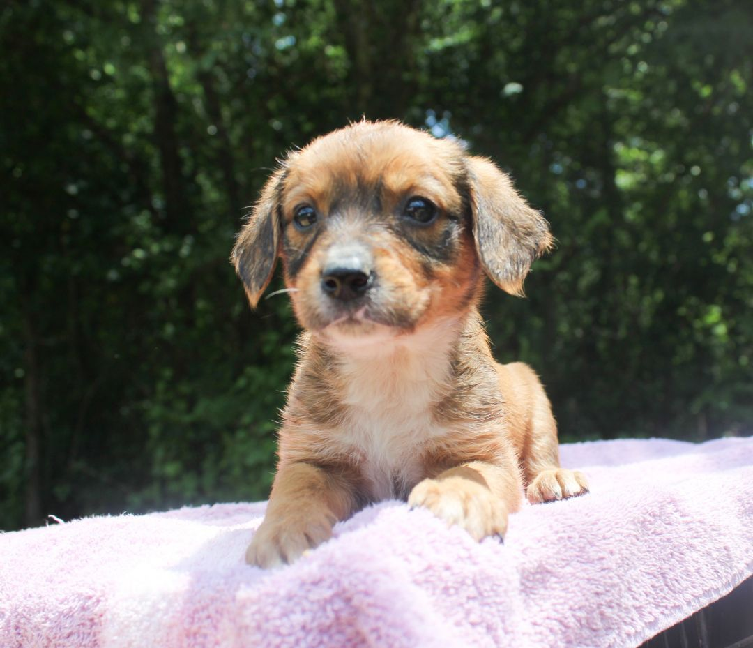 Puppies available for adoption in vt