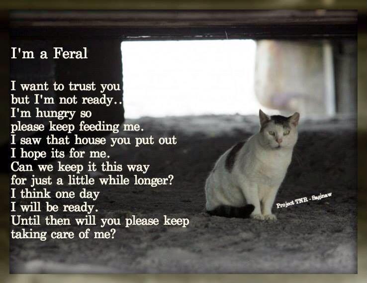 I Am A Feral Feral Cats Animals Cats