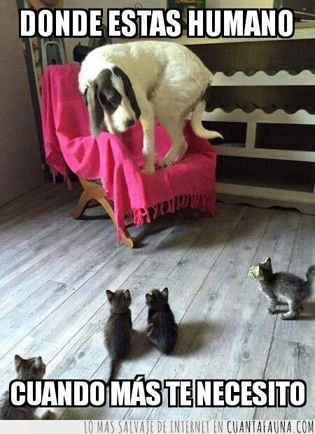 Cuando Te Ves En Aprietos Fotografias Divertidas De Animales Gatos Y Perros Lindos Gatos