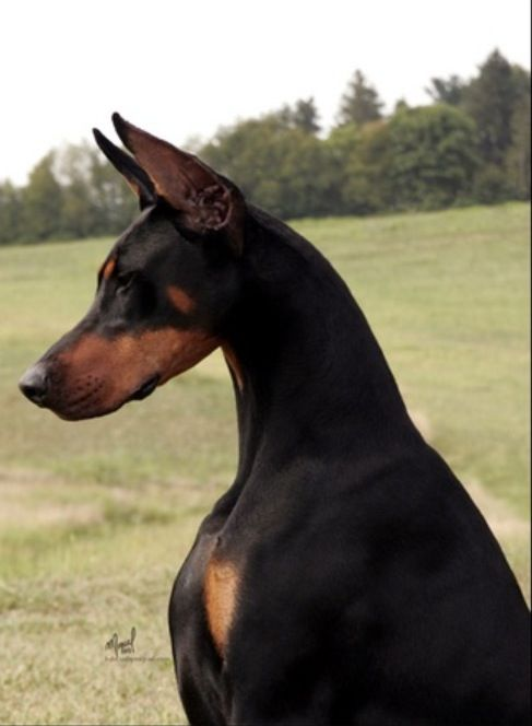 Look At That Gorgeous Neck No Wonder Arabian Horse Breders Are
