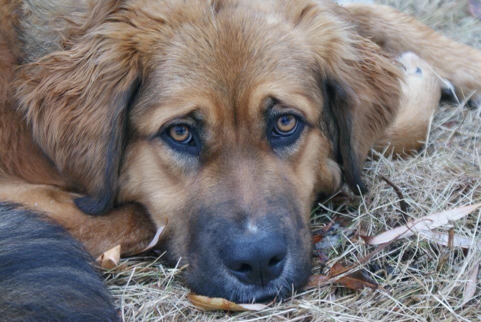 Deogie Puppy VSPETS Pet Competition, Pet