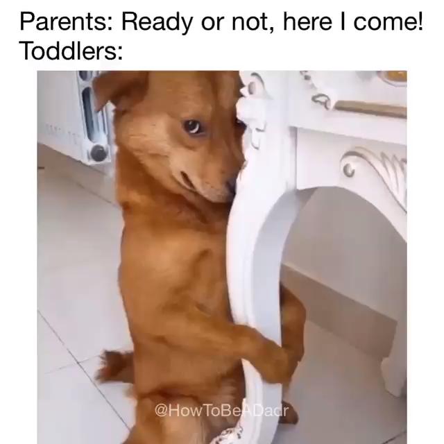Photo of lustige Hunde Meme