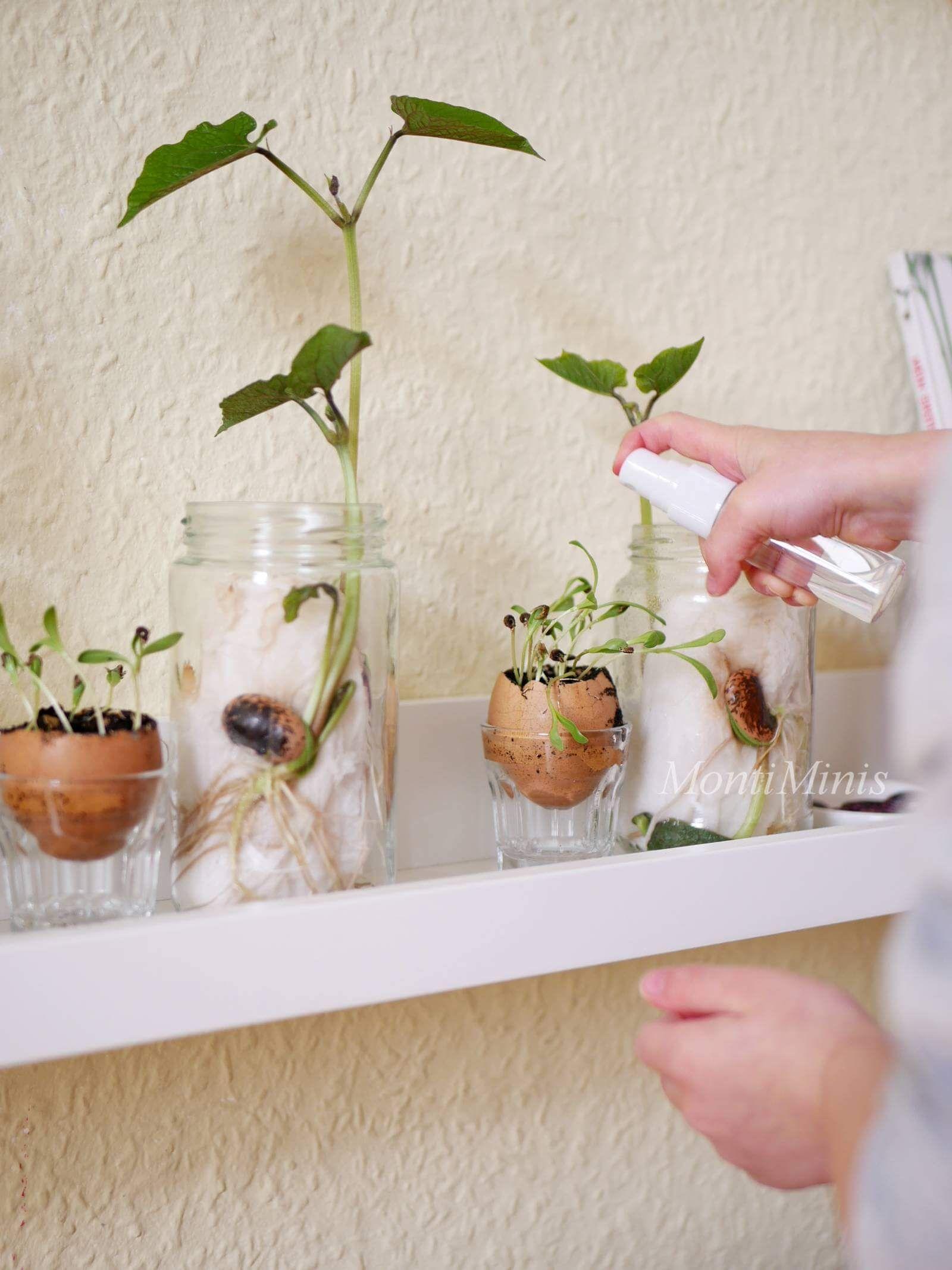 Photo of Exciting plant experiments for children – Montessori blog – MontiMinis