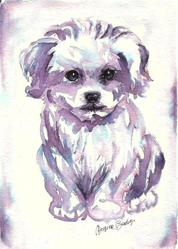 Art Original Watercolor Animals Pet Dog Maltese By Artistatoscana