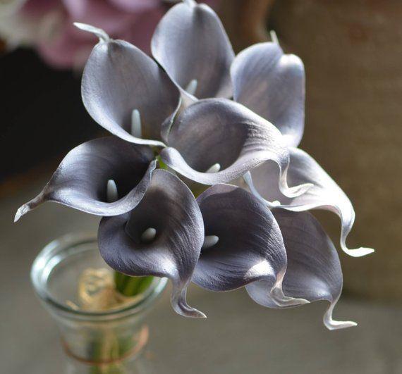 gray calla lilies real