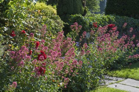 Long-Blooming Perennials You Should Have In Your Garden