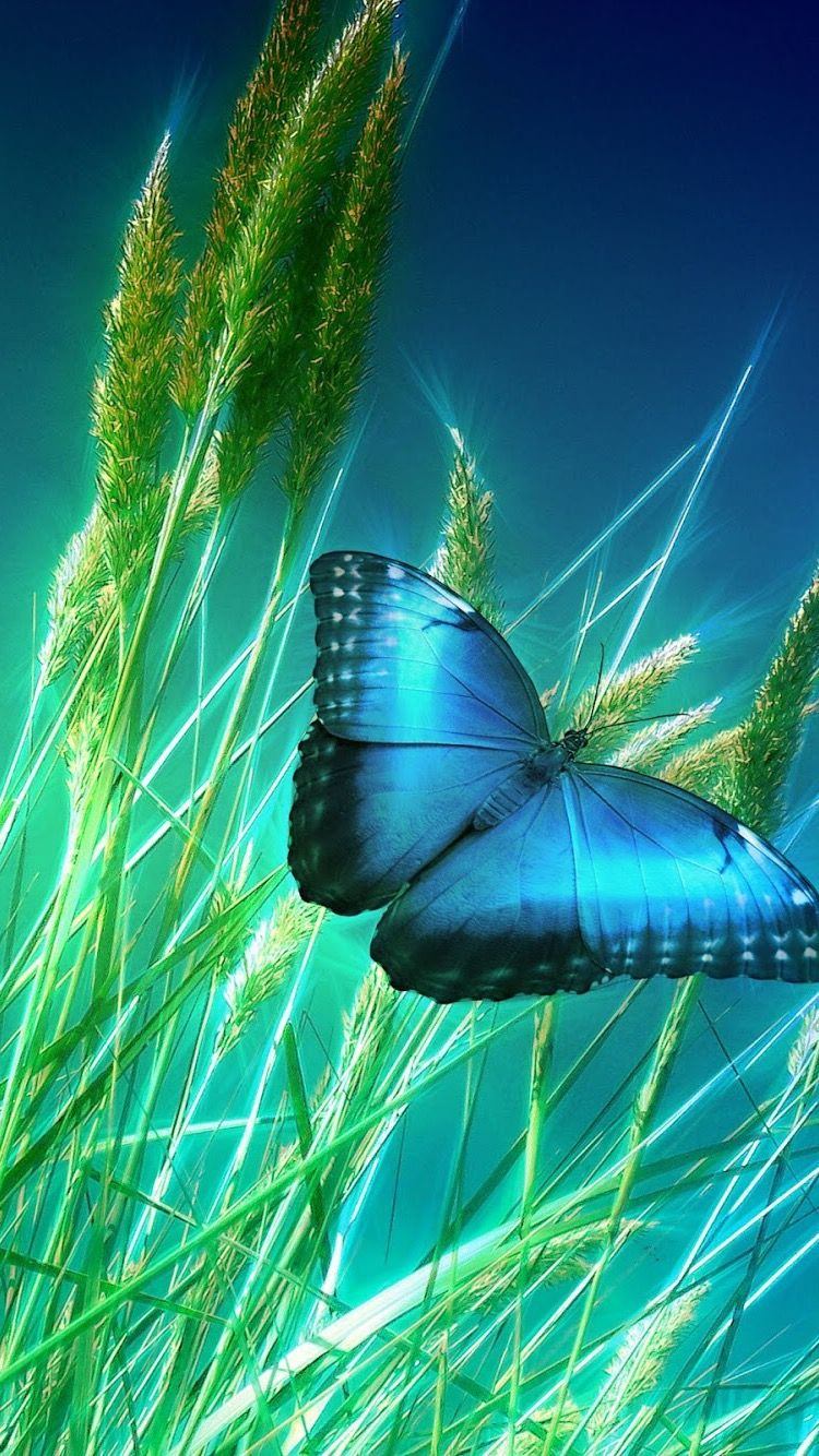 Hd Iphone Wallpaper Butterfly Dragonfly Wallpaper Beautiful Butterflies Beautiful Wallpapers