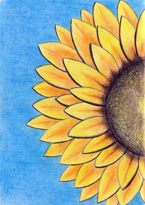 Sunflower Coloured Pencil Pen Color Pencil Sketch Crayon Drawings Sunflower Drawing