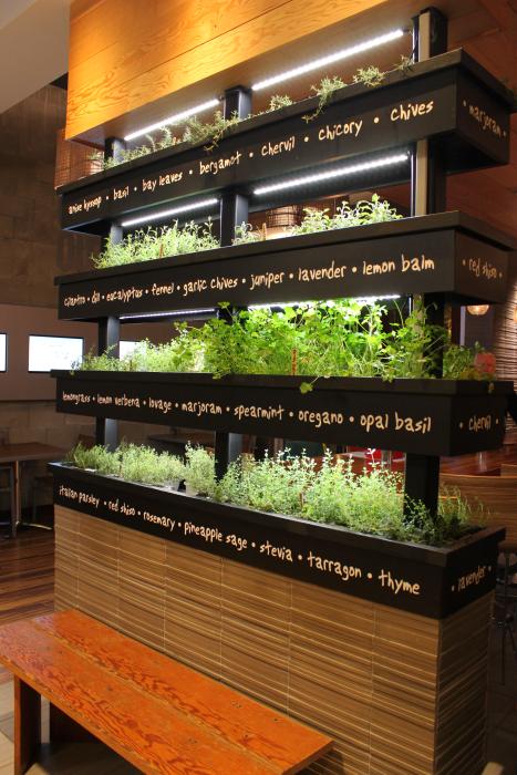 Vertical herb garden lyfe kitchen restaurant in palo for Indoor garden kitchen design