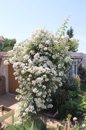 Minigärtchen Gartenvorstellungen (hier bitte keine Kommentare- nur ...