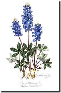 bluebonnet clip art google search tattoo ca tx pinterest art rh pinterest com bluebonnet clipart png texas bluebonnet clipart