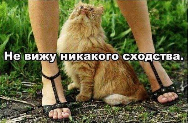 Галина: Ложусь поздно,встаю рано...Может я солнышко?)))
