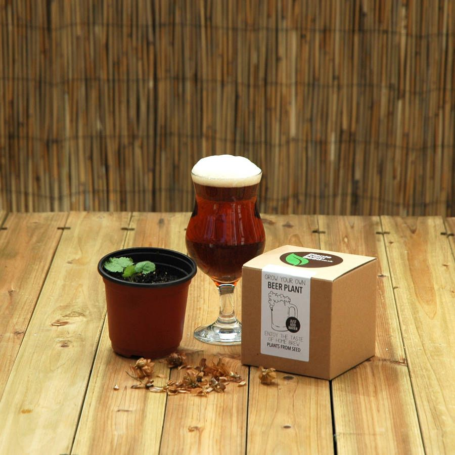 Beer hops plant kit this is a grow your own hops beer