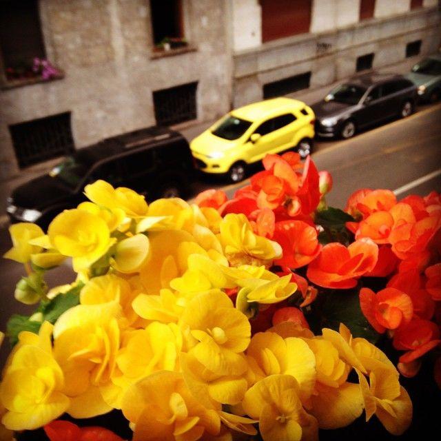 Via Besana in giallo