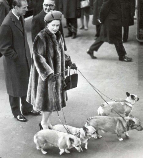 Queen Elizabeth and her corgis. Her original royal corgi Susan was bought by the Queen's father, George VI, when Duke of York, in 1944.