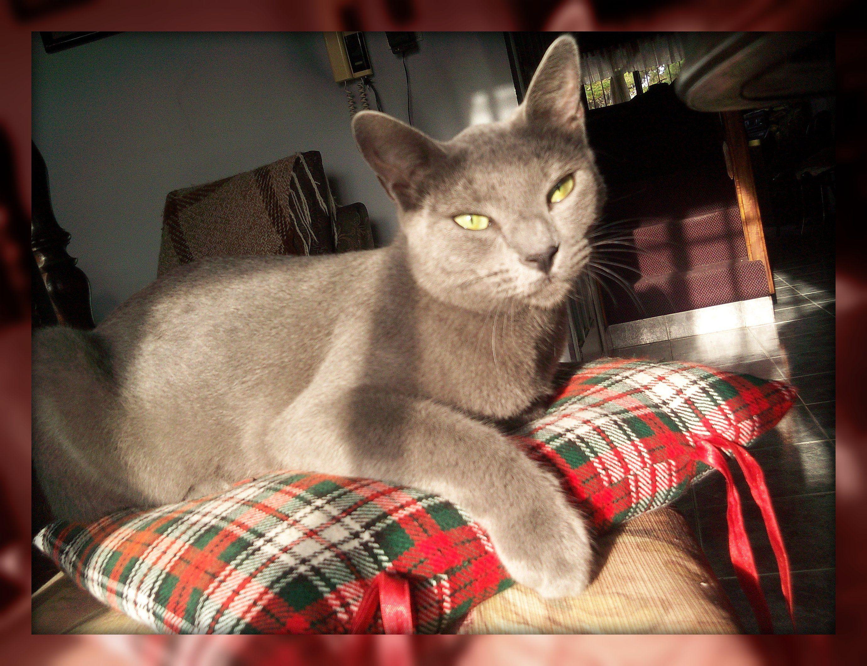 Jade La Enamorada De Merlin Kitty Cats Animals