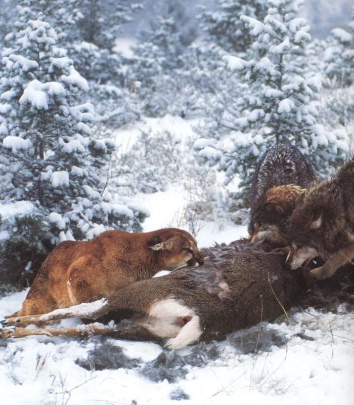najlepsze ceny kody promocyjne najlepsza strona internetowa Pin on Tigers & Wolves