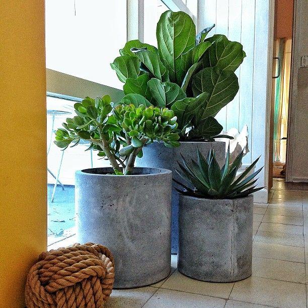 Pin by Sara Winwood on Houseplants Plants, Indoor garden