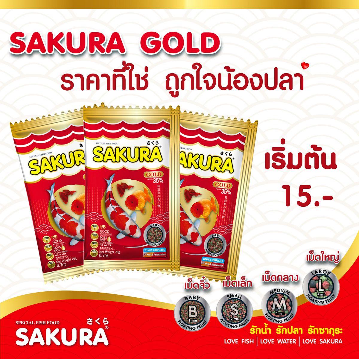 ป กพ นในบอร ด Sakura Gold