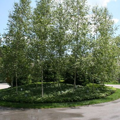 Berms Planting Design Ideas, Pictures, Remodel, and Decor