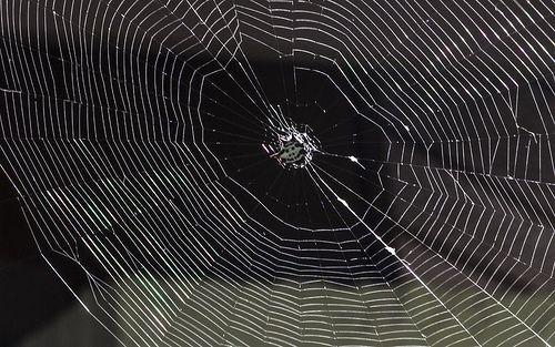 spiderguy