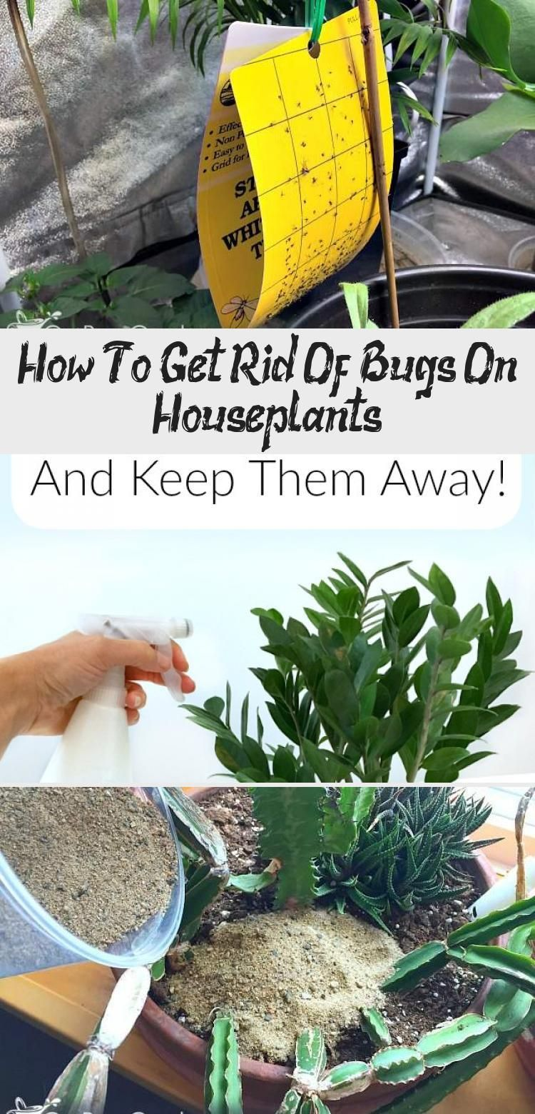 How to get rid of bugs on houseplants in 2020 with images