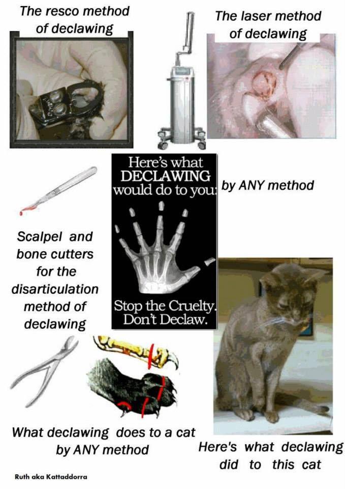 Pin by Lori Hinton on animals Stop animal cruelty