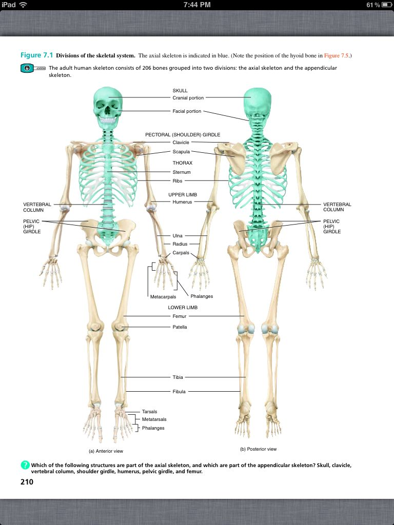 Principles of Anatomy and Physiology, Chapter 7, The Skeletal System ...
