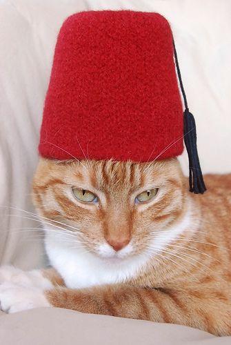 International Cat Hat: Turkey by wildtomato, via Flickr