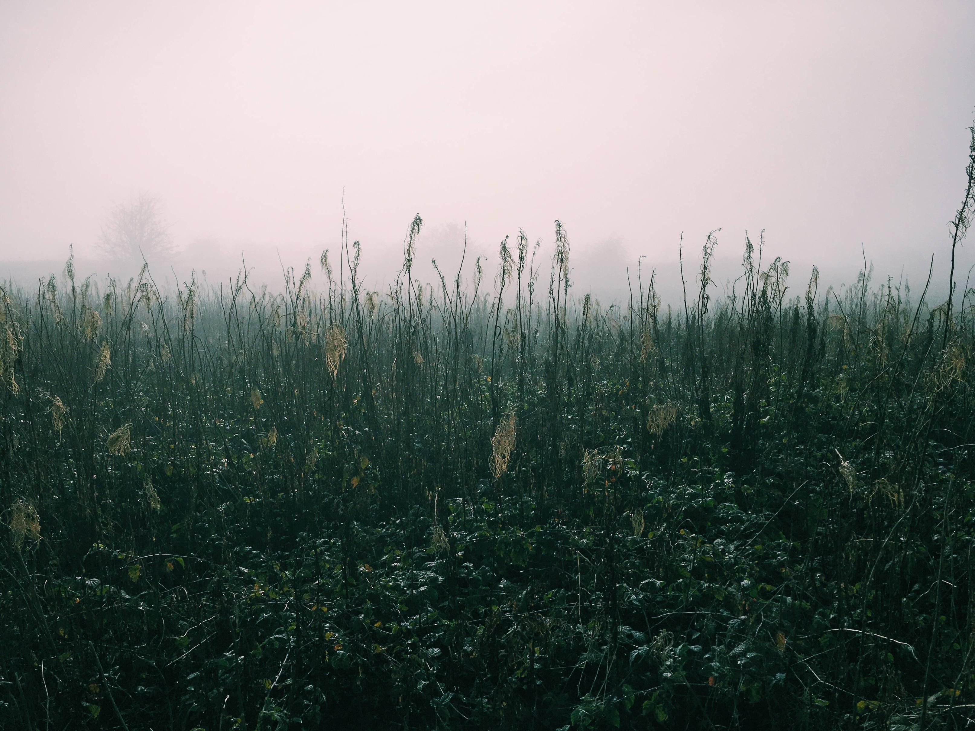 in the tall grass and fog oc 4032 x 3024 wallpapers