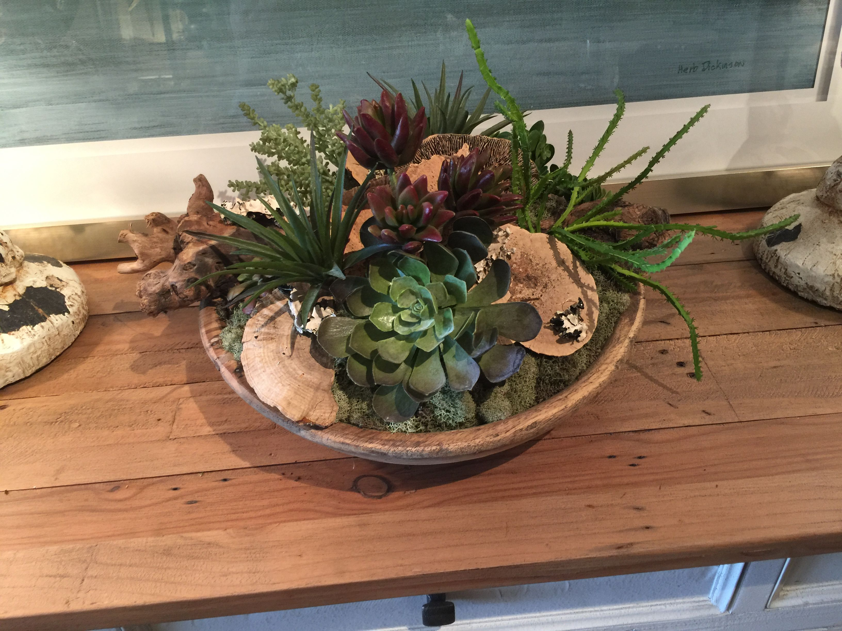 Pin by Anne Krekelberg on Succulents Succulents, Floral