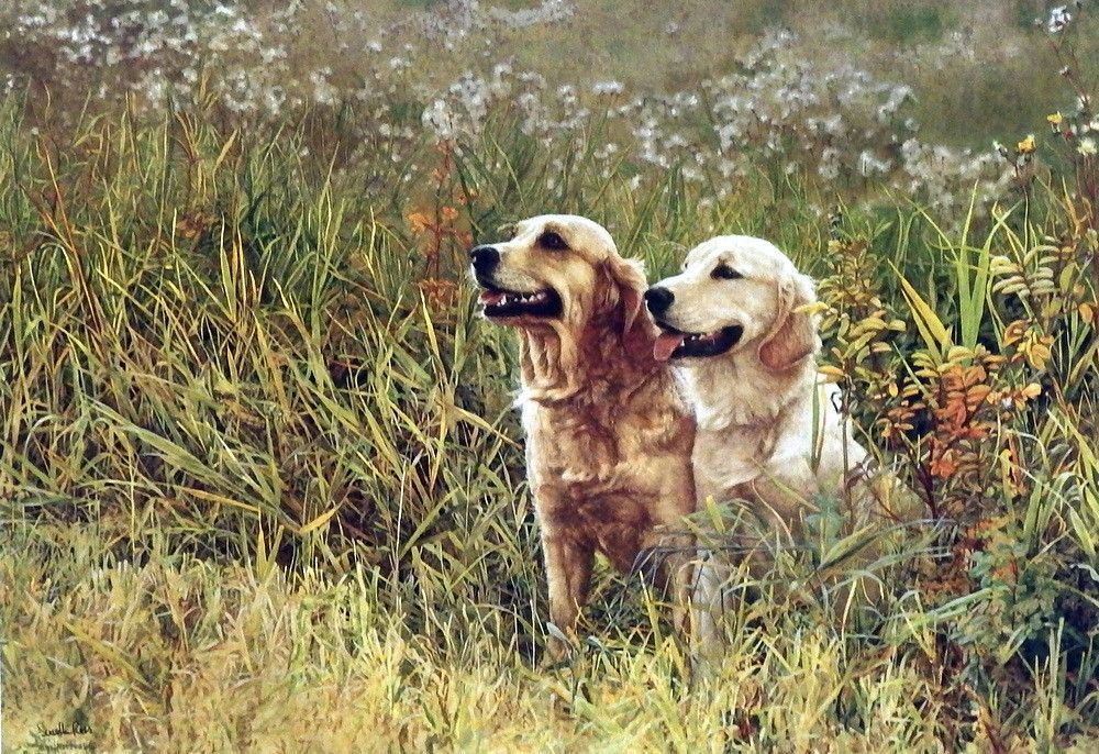 A pair of golden retrievers are panting as the sun beams down on them as they have had A FIELD DAY. A long day full of play for these two pups. This print is signed and is available unframed in an ima