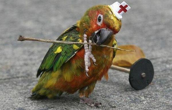 Really funny parrots