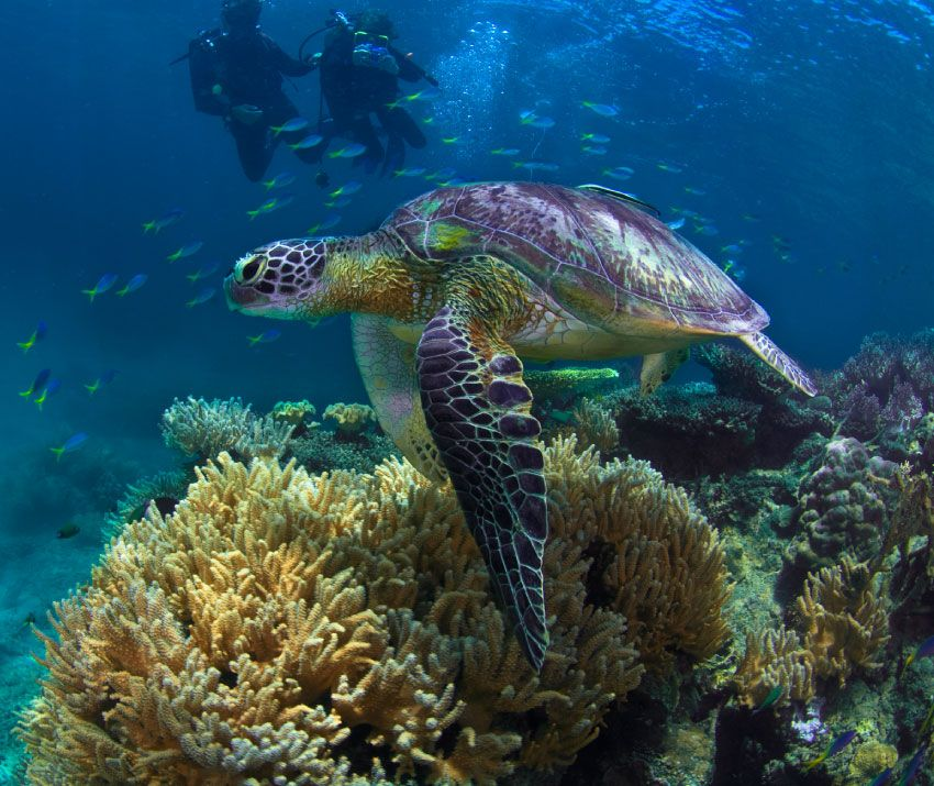 Fitzroy Island Queensland: Best Place To See The Great Barrier Reef