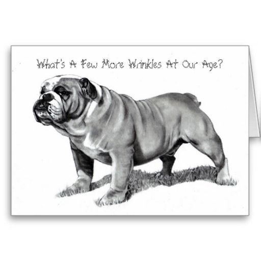 BULLDOG: WRINKLES: BIRTHDAY CAR: PENCIL REALISM CARDS