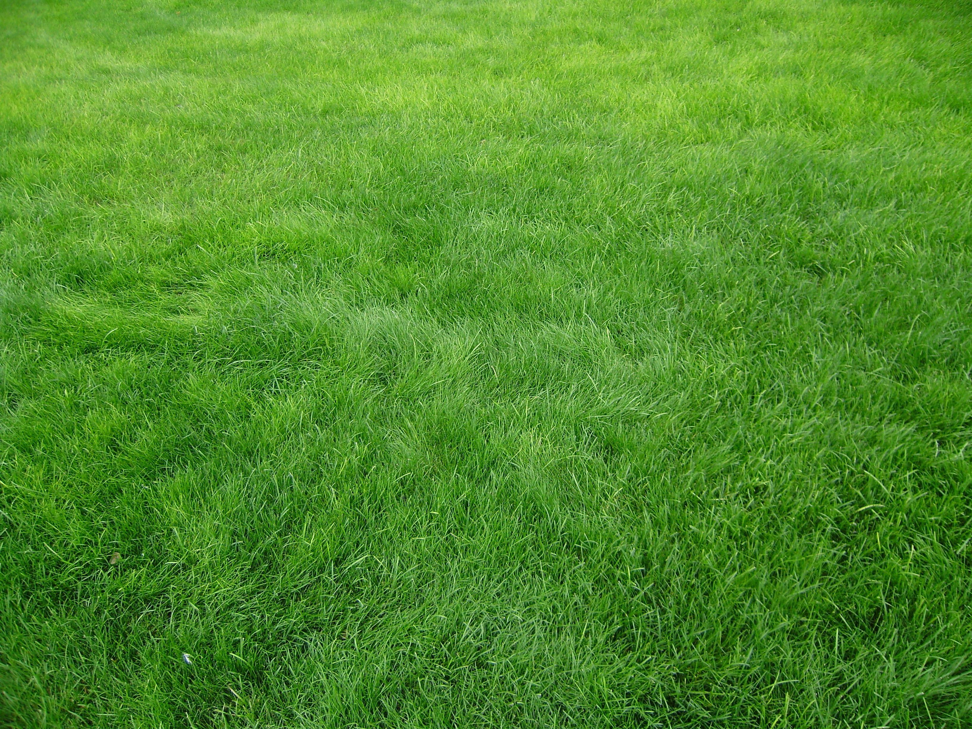 3264x2448 Wallpaper Grain Grass Field Green Clipart Grass Field