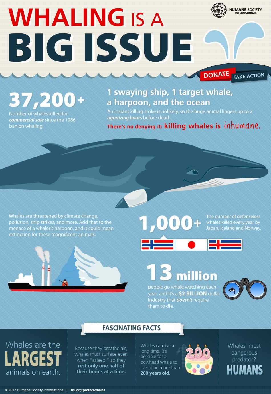 Why does whaling happen?