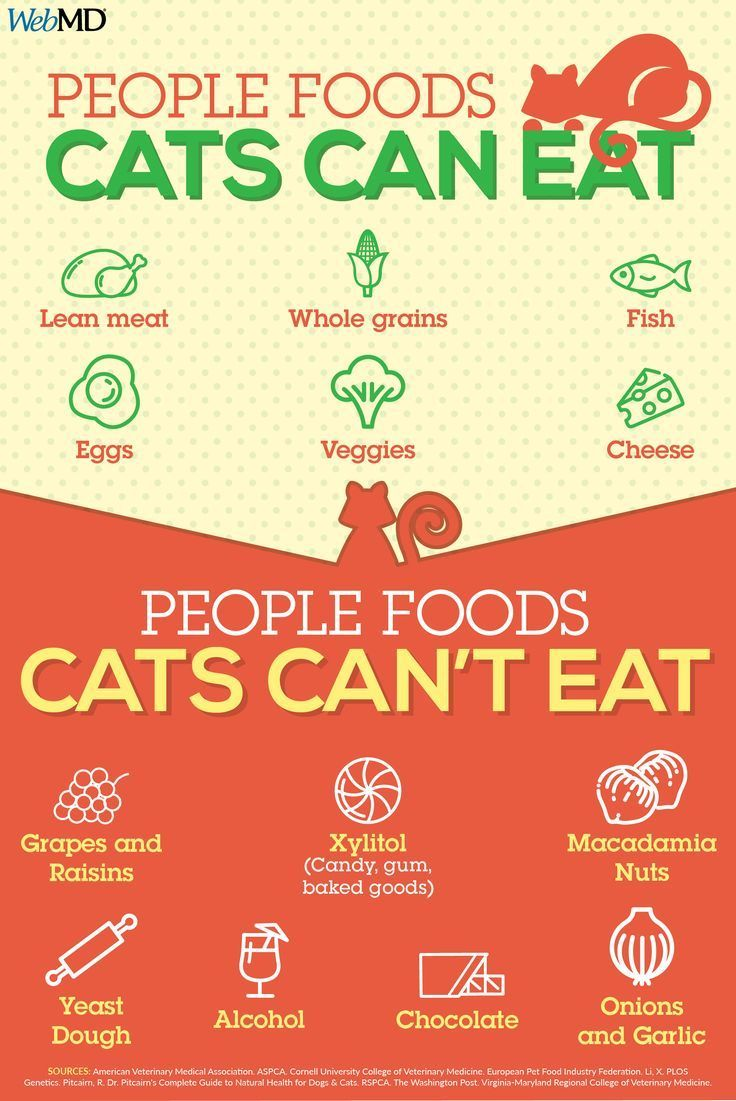 Slideshow People Foods Cats Can Eat Foods cats can eat
