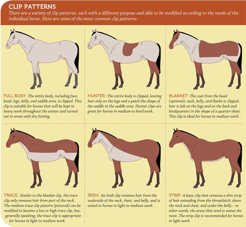 Horse Clip Style Chart And Instructions