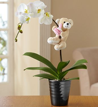 Happy Birthday Orchid From 1 800 Flowers Com 101001 Plant Gifts Balloon Flowers Orchids